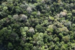 Pristine rainforest in Sabah