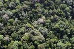 Ancient rainforest in Borneo