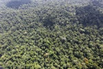 Oldgrowth rainforest in Malaysian Borneo