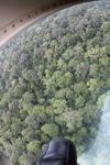 Borneo rainforest -- sabah_1367