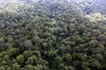 Primeval rain forest