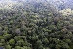 Primeval rainforest in Malaysia