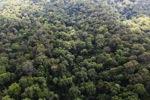 Primeval rain forest in Malaysia