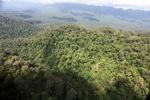 Primeval rain forest in Sabah