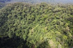 Primary rainforest in Borneo