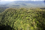 Primary rainforest in Malaysian Borneo