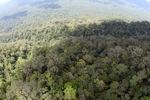 Primary rain forest in Malaysia