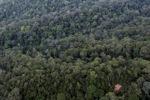 Virgin rain forest in Imbak Canyon, Malaysia