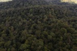 Virgin rainforest in Imbak Canyon, Sabah, Malaysia