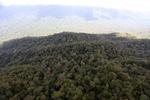 Virgin rainforest in Imbak Canyon, Sabah