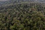 Untouched rainforest -- sabah_1398