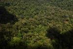 Pristine rainforest -- sabah_1408