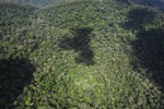 Pristine rain forest -- sabah_1410