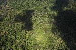 Ancient rain forest -- sabah_1420
