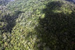 Oldgrowth rainforest -- sabah_1428