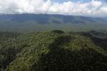 Oldgrowth rain forest -- sabah_1430