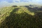 Oldgrowth rainforest in Imbak Canyon, Sabah, Malaysia
