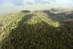Oldgrowth rain forest in Imbak Canyon, Sabah, Malaysia