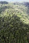 Old-growth rainforest