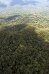 Old-growth rain forest -- sabah_1440
