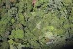 Borneo rainforest -- sabah_1448