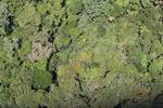 Primeval rain forest -- sabah_1451