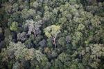Primeval rainforest in Imbak Canyon, Sabah, Malaysia