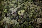Primeval rain forest in Imbak Canyon, Sabah, Malaysia