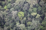 Primary rainforest in Imbak Canyon, Borneo