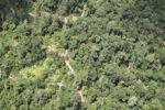 Logging road -- sabah_1468