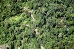 Logging road -- sabah_1469