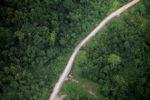 Logging road -- sabah_1473