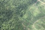 Oil palm plantation -- sabah_1477