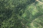 Oil palm plantation -- sabah_1478