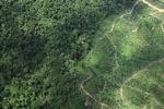 Oil palm plantation -- sabah_1479
