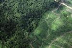 Oil palm plantation -- sabah_1481