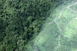 Oil palm plantation -- sabah_1483