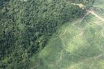 Oil palm plantation -- sabah_1485