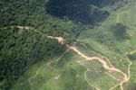 Logging road -- sabah_1487
