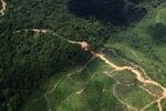 Logging road -- sabah_1489