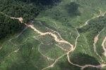 Logging road -- sabah_1492