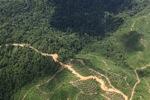 Logging road -- sabah_1493