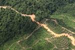 Logging road -- sabah_1494