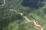 Logging road -- sabah_1495