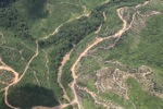 Logging road -- sabah_1496