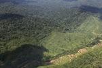 Logging road -- sabah_1499