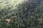Logging road -- sabah_1500