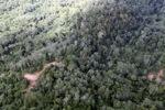 Logging road -- sabah_1501