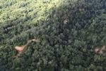 Logging road -- sabah_1502