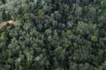 Logging road -- sabah_1503